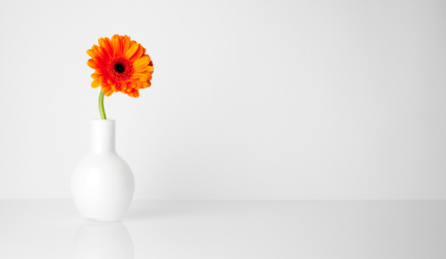 Minimalist flower picture